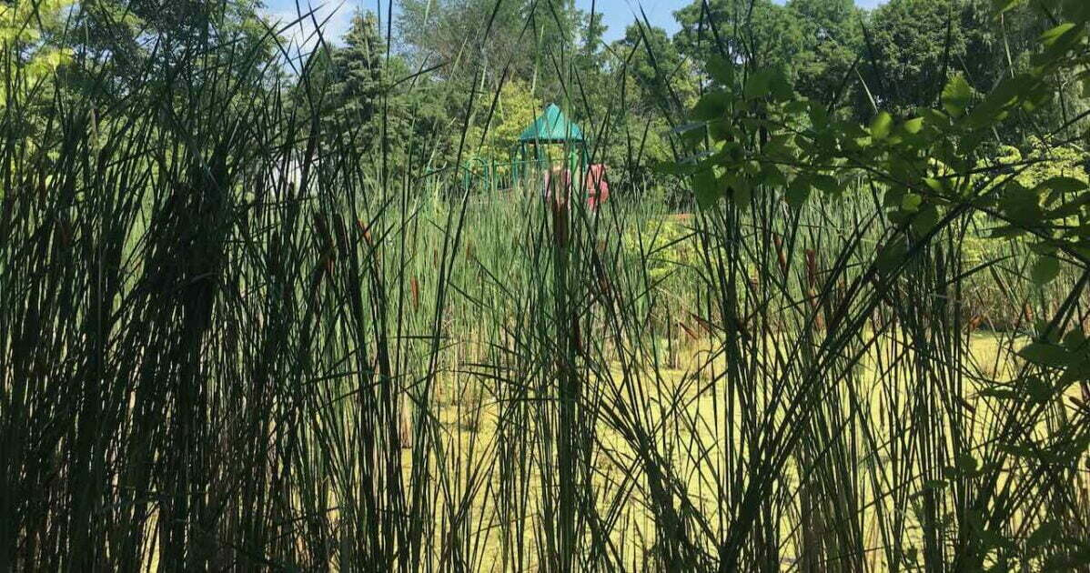 Garden Homes Park - Reeds & Swamp in front of structure