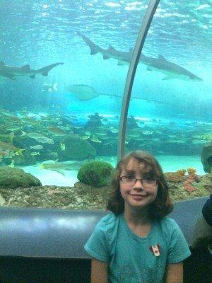 Tornto Trip - Ripley's Aquarium of Canada - Shark Tank
