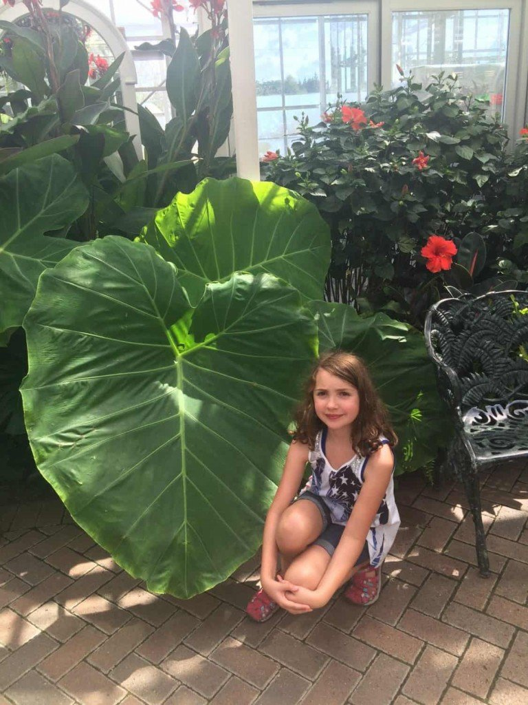 grand-rapids-meijer-gardens-giant-leaf