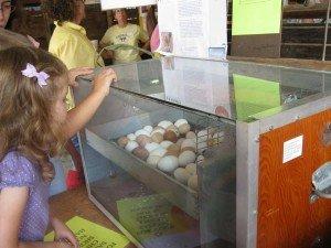 Saline Fair Preschool Day - Eggs