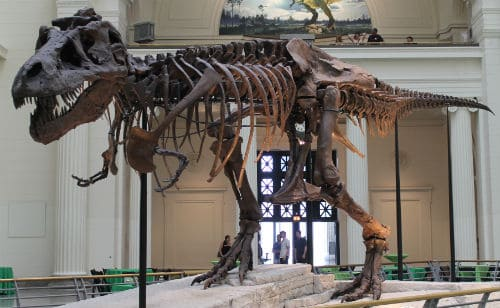 A T. rex named Sue at Michigan Science Center