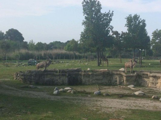 Toledo Zoo Africa