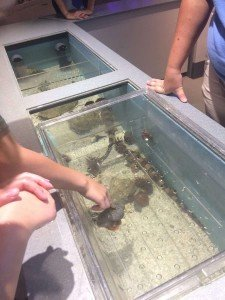 Toledo Zoo New Aquarium Touch Tank