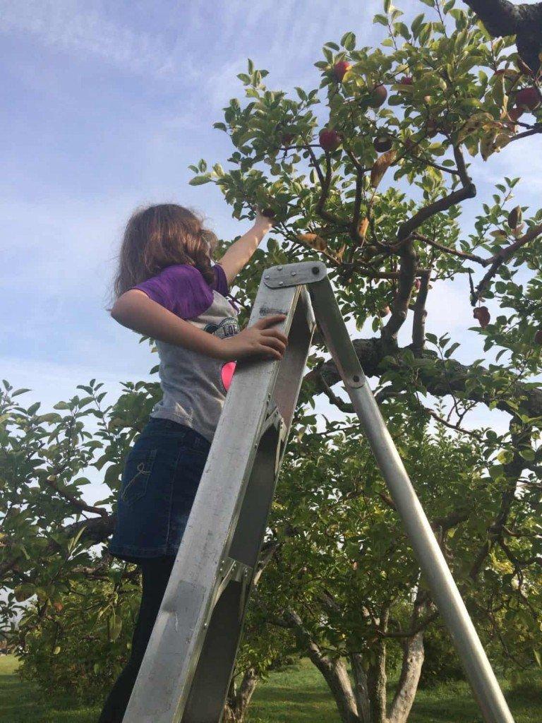 Wasem Fruit Farm - Apple Picking