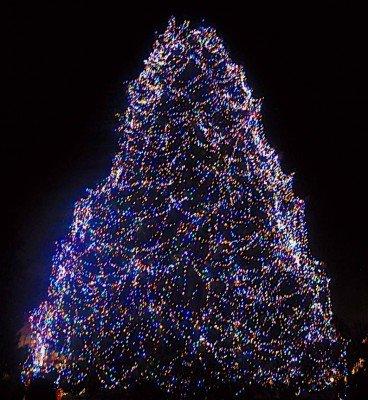 Big Tree at Lights Before Christmas