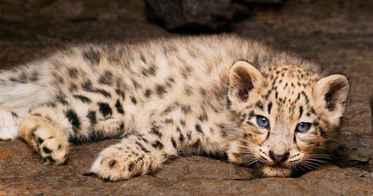 Born in China Review - Dawa's Cub