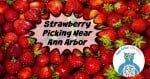 Ann Arbor Strawberry Picking