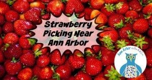 Ann Arbor Strawberry Picking