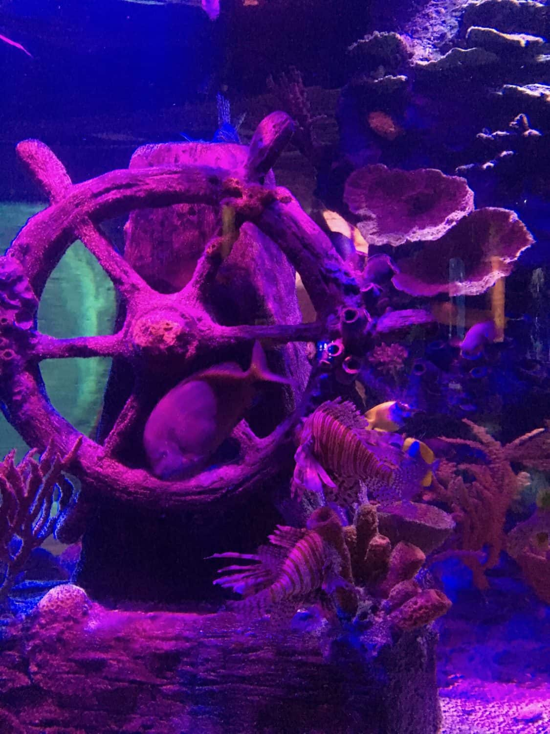 SEA LIFE Michigan - Activity Review | Ann Arbor with Kids