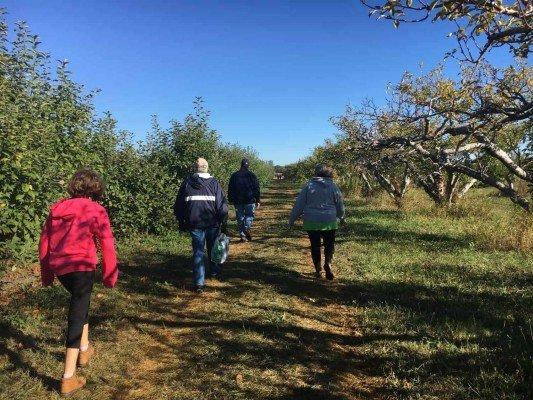 Apple Picking at Wasem Fruit Farm - Go to the Back of the Row