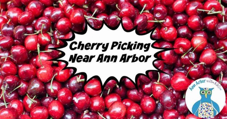 Ann Arbor Cherry Picking
