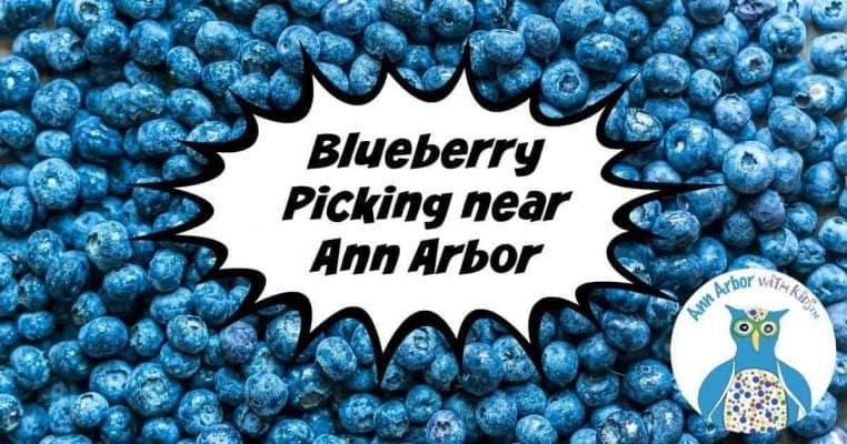 Ann Arbor Blueberry Picking