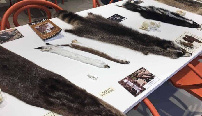 Canopy Walk - Animal Pelts in Forest Classroom - Whiting Forest - Dow Gardens