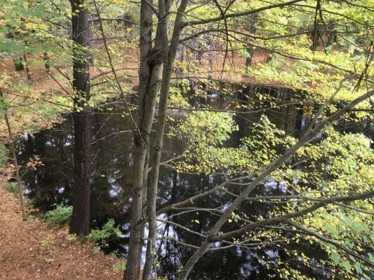Canopy Walk - Forest Pond View - Whiting Forest - Dow Gardens