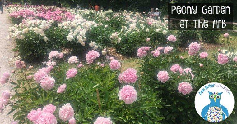 Arb Peony Garden