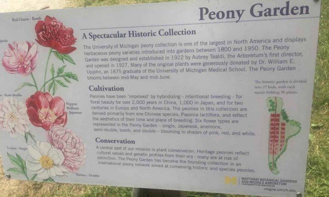 Arb Peony Garden - Sign with History