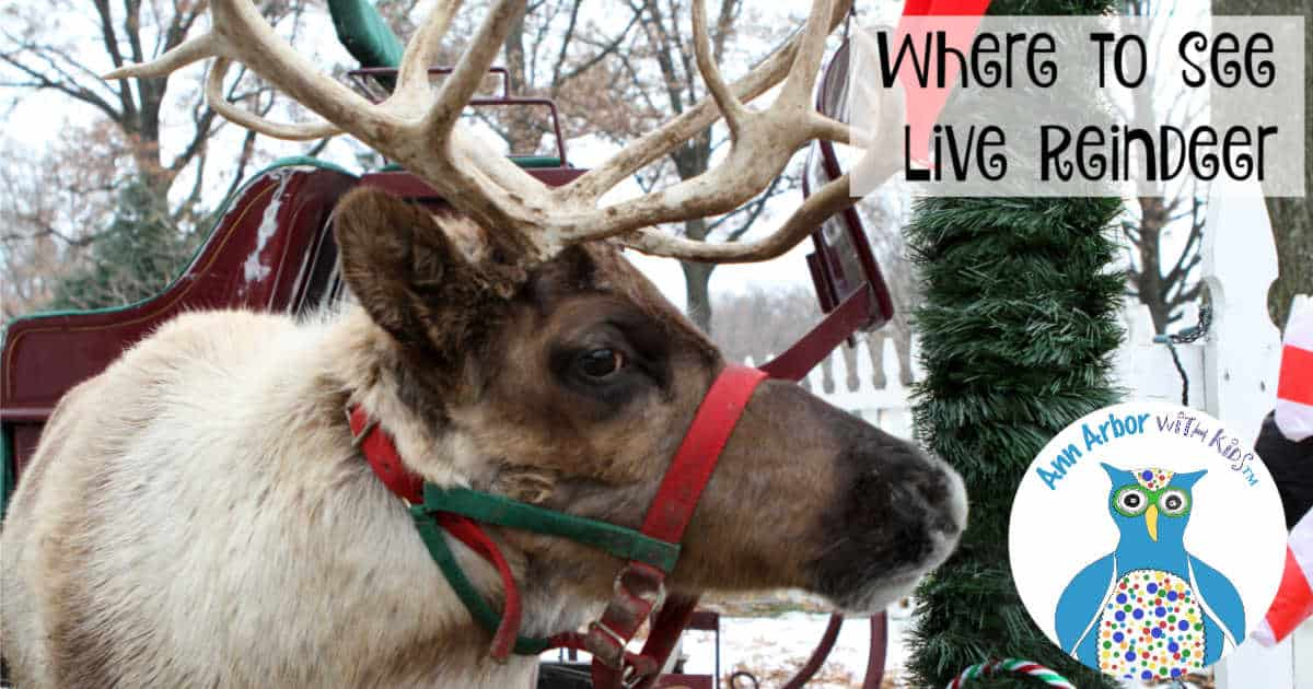 Where to see Live Reindeer in Ann Arbor