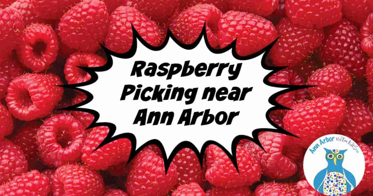 Ann Arbor Raspberry Picking